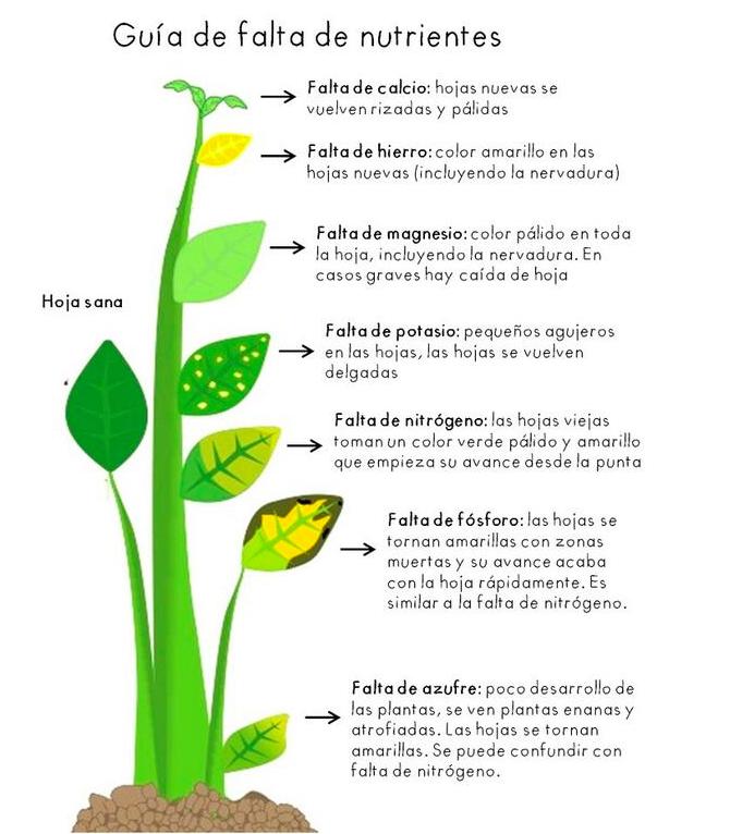 Guía rápida de falta de nutrientes en cultivos