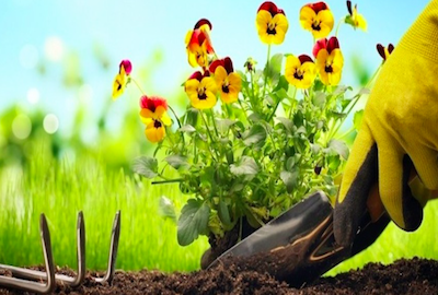 Todo lo necesario para tu huerto y jardín