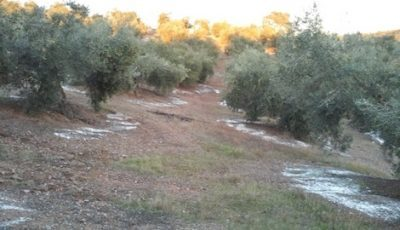 Abonado olivar