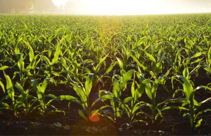 El -suelo-tierras-de-cultivo